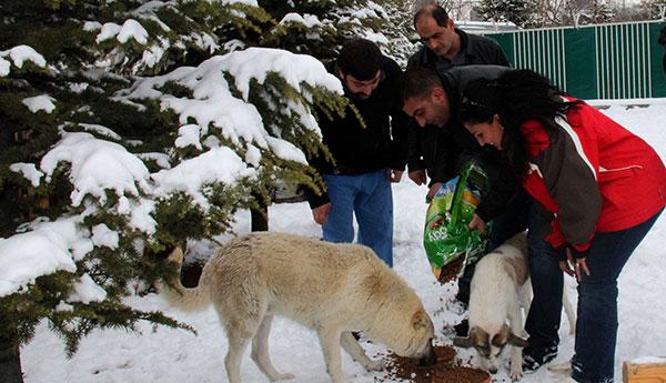 Hayvanlar_30012017_b